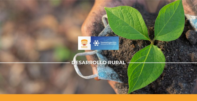 Planta, investigación, semilleros